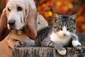 """Zwierzęta - """"terapeuci"""" dla chorych psychicznie [Fot. bodza2 - Fotolia.com]"""